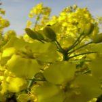 Wyszukiwarka środków ochrony roślin online