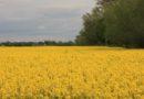Środki ochrony roślin – zasady obrotu i stosowania
