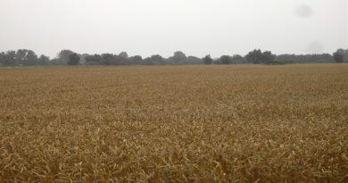 Najnowsze technologie dla rolnictwa