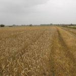 Czy kryzys klimatyczny zagraża polskiemu rolnictwu?