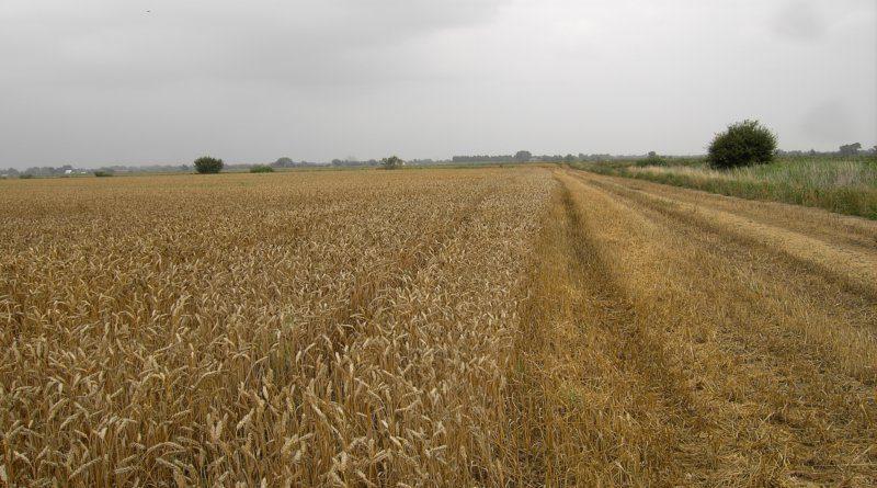 Priorytety działań dla upowszechnienia rolnictwa zrównoważonego