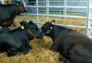 Senacka Komisja Rolnictwa i Rozwoju Wsi rozpoczęła prace nad nowelą ustawy o ochronie zwierząt