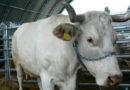 Zmiany przepisów IRZ i zgłoszenia zwierzęce przez Internet