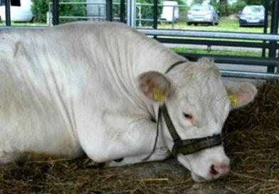 Sondaż w sprawie piątki dla zwierząt