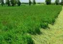 Co nowego w rolnictwie ekologicznym?