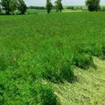Zielone AgroShow w Ułężu online