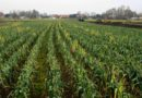 Międzynarodowe sympozjum Virtual Borlaug Dialogue 2020