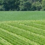 Zadbaj o potas w glebie jesienią