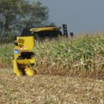 Początek zbioru kukurydzy na ziarno