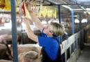 Propozycja zakazu reklamy mięsa uderza w stabilność bezpieczeństwa żywnościowego kraju
