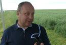 Jak chronić kukurydzę?