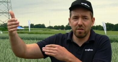 Jaka ochrona zbóż?